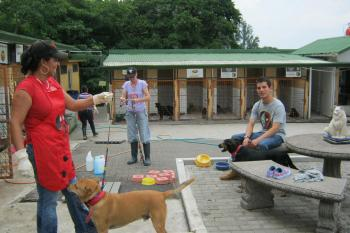 AHPPA Animal Shelter - Costa Rica