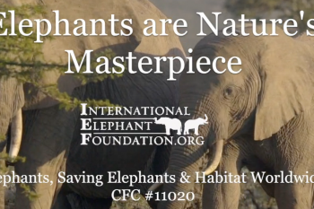 Elephants, Saving Elephants and Habitat Worldwide  Video