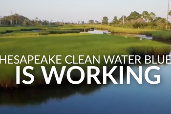 Chesapeake Bay Foundation Video