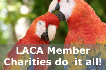 Local Animal Charities of America Video